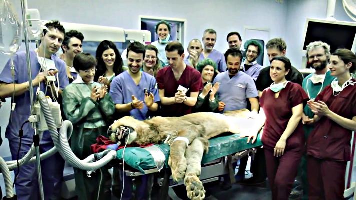 Leonardo-leone-operato-a-lodi