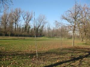 alberi1