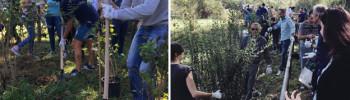 belgiardino-piantumazione-alberi-parco-adda-sud-panta-lodi