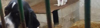 canile-cervignano