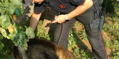 carabinieri-cinofila-4
