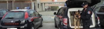 carabinieri-cinofili-cinofila-lodi-notizie