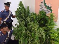 carabinieri-mentre-repertano-la-cannabis