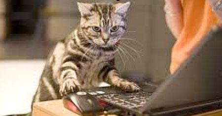 gatto computer
