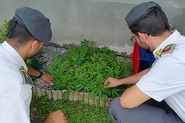 marijuana-finanza-caselle