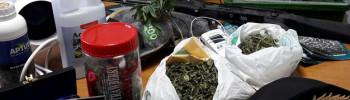 marijuana-serra-e-varie-senna-lodigiana