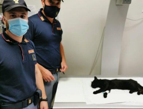 Milano. Polstrada salva gattino: il ringraziamento della LEIDAA